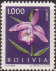Resultado de imagem para Sobralia macrantha bolivia