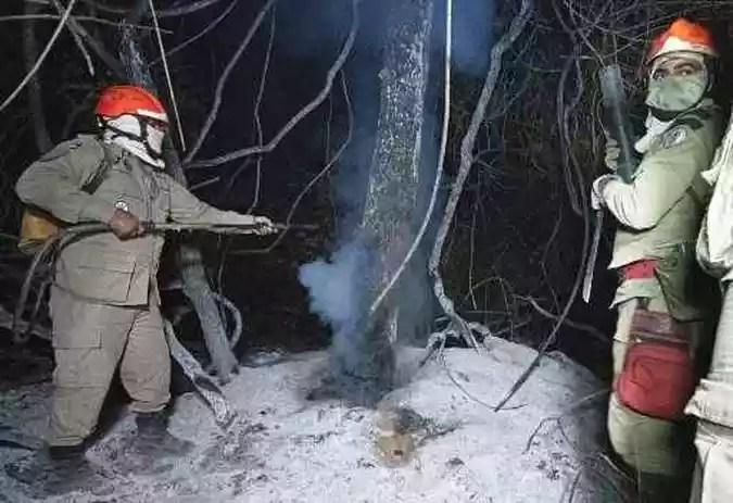 Bombeiros combatem incêndios florestais em Poconé, região do Pantanal (as maiores áreas úmidas tropicais do mundo), Mato Grosso, Brasil em 31 de julho de 2020.(foto: ROGERIO FLORENTINO / AFP)
