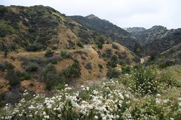 Runyon Canyon Park, a popular walking and hiking destination in the Hollywood Hills