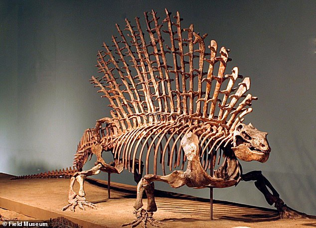 The ancient relatives of mammals began to evolve smaller, more flexible shoulders around 270 million years ago. Edaphosaurus, an early mammal relative that lived around 300 million years ago, which had a more primitive backbone with just three different regions