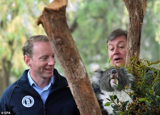 South Australia Minister for Environment and Water David Speirs (left) and Cleland Director Chris Daniels are seen with Bel, a 13-year-old Koala, at the Koala enclosure at Cleland Wildlife Park in Adelaide