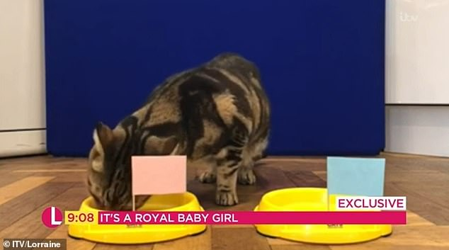 A psychic cat predicted that the Duke and Duchess of Sussex's baby will be a girl when the feline appeared on ITV's Lorraine on Tuesday morning. He made the prediction by eating from a pink bowl instead of a blue one
