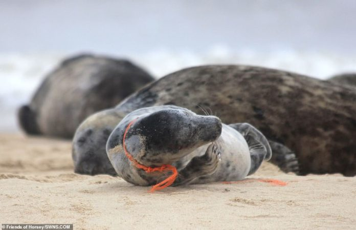 Items that cause such injuries - and even death - are, for example, fishing nets or plastic waste located in coastal areas such as Horsey Beach in Norfolk