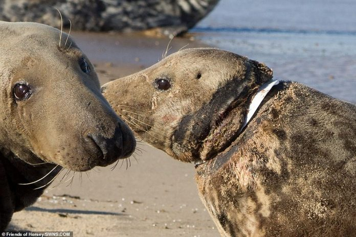 Alison Charles, manager of the RSPCA's East Winch Wildlife Center, Norfolk, said Man- delman-made items kill seals daily in the water or on beaches