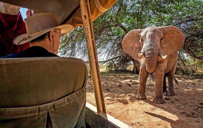 Momentum: Visitors to the Samburu National Reserve in Kenya can experience elephants up close