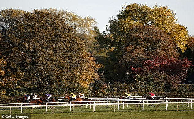 There are races in Plumpton on Monday, and Sportsmail has some tips from experts to try