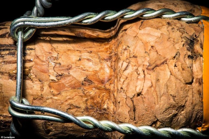 Pictured is a closeup of a cork. These amazing close-ups show the unfamiliar texture of household items