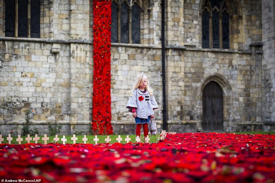 Scarlet, trois ans, regarde les milliers de coquelicots tricotés à la main qui coulent de la tour et sur le terrain de l'abbaye de Selby dans le Yorkshire.