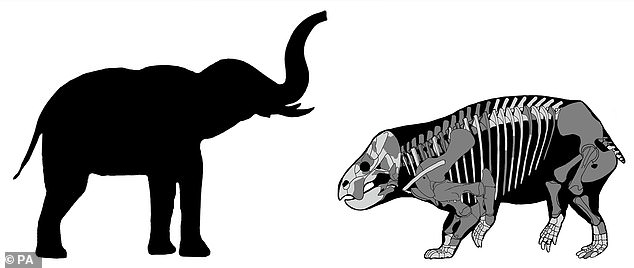 A comparison between Lisowicia bojani (right) and a modern elephant (left)