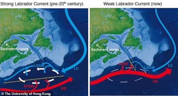 The weakening ocean: This is a scheme of circulation in the western North Atlantic during the strong (left) and weak (right) west of the Labradorian Current (LC). The oceanography of this region is characterized by the interaction of the water bodies formed in the Labrador and the interactions of water bodies moving eastward (LC and Labrador Sea Tilt Water (LSSW)) and Gulf Stream (GS) and the Atlantic Temperate Tilt. Water (ATSW). The place where these two water mass systems come together (yellow dashed lines) is then determined by the force of the north recirculation grease (white arrows) that control the temperature.