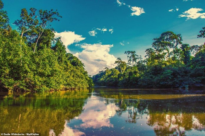 Sadie landed in the South American country as an expedition run by ex-SAS officer Ian Craddock via his company Bushmasters and the two-week trip required Kwitaro river, pictured above