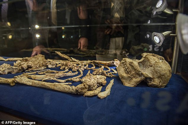 The skeleton dates back 3.6 million years.Four scientific papers, which are yet to be peer-reviewed or published, claim the skeleton of an elderly female with a crippled left arm proves she does not belong to any known species of human ancestor