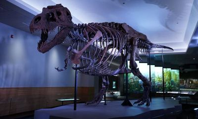 Sue, the world-famous T. rex, gets a new lair in Chicago