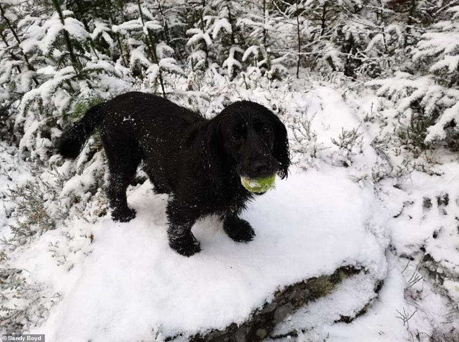 Sandy Boyd, 49, took this photograph in Inverness with her cocker spaniel Holly