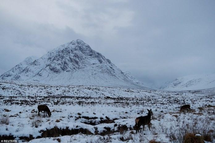 In weiten Teilen Schottlands herrschte ein gelber Wetteralarm, der am Sonntag von 21.00 Uhr bis Montag um 12.00 Uhr auftrat. Auf höheren Lagen werden bis zu 6 cm Schnee erwartet (Abbildung: Rotwild streift in der Nähe von Buachaille Etive Mor, Schottland).