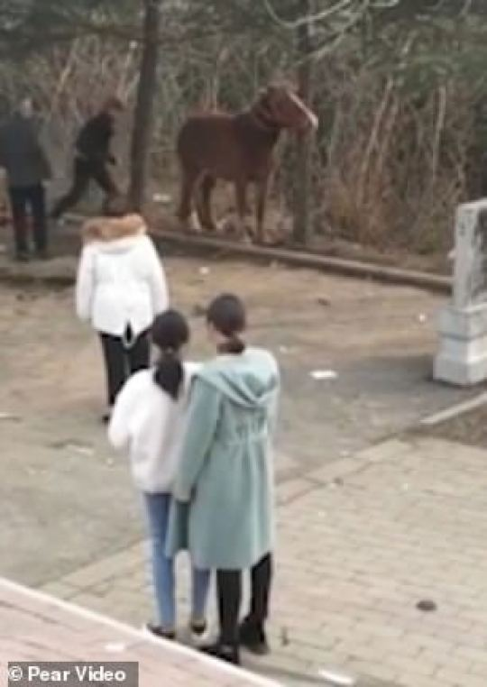 According to a witness, the elderly man in Zaozhuang, Shandong province started whipping his horse with a large stick as it wouldn't behave and stand still for tourists to take photos