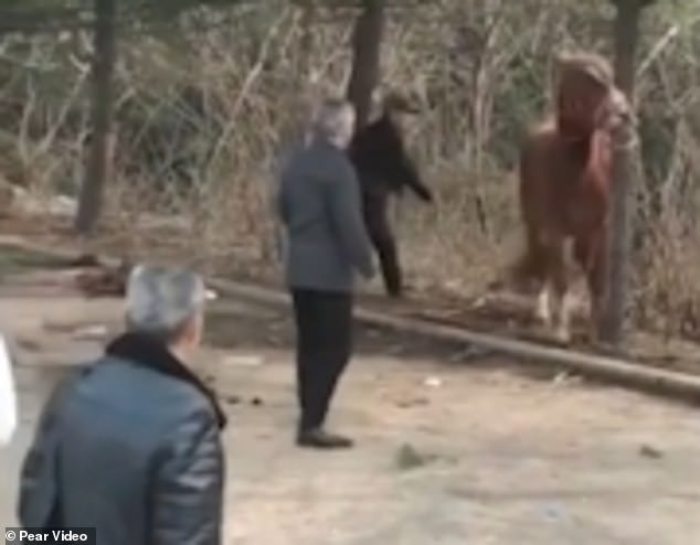 The clip, published by video news site Pear on Thursday, shows the frightened horse cowering in fear and trying to avoid the stick after several blows. It was seen tied to a tree