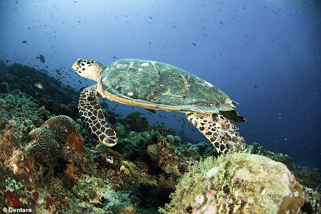 The underwater wildlife is  breathtaking and is just inches away from your private Centara villa
