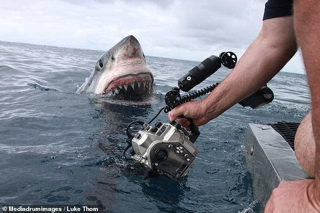 A series of photos have captured the moment a monstrous great white shark lunges out of the water, coming within centimetres of a photographer's hand