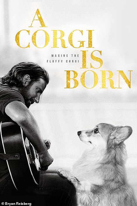 Homage: Filmmaker Bryan Reisberg and his wife Alex Photoshopped their Instagram famous corgi Maxine into their favorite movie posters of the year in celebration of this year's Oscars, including A Star is Born