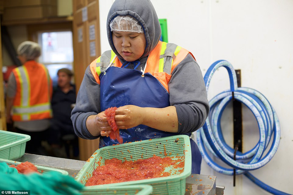 Adam ventured inside salmon factories along his way. Above, a worker sifts through a tray of salmon roe