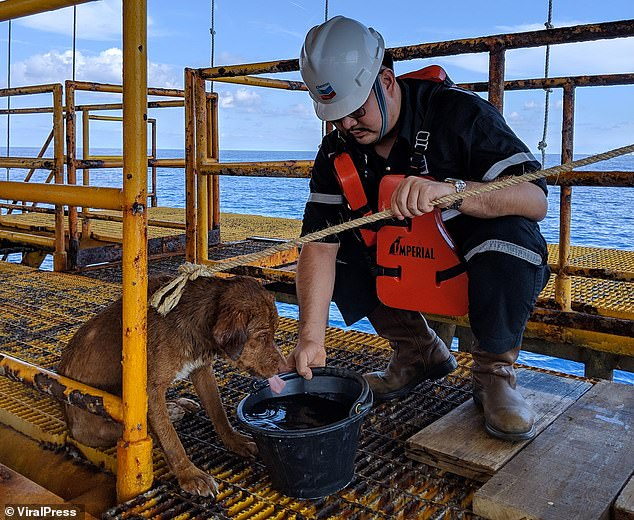 Oil rig worker Khon Vitisak, who rescued the dog, offers her a bucket of water which she readily accepts