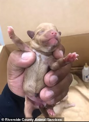 The puppies are now being cared for at an Orange County rescue shelter