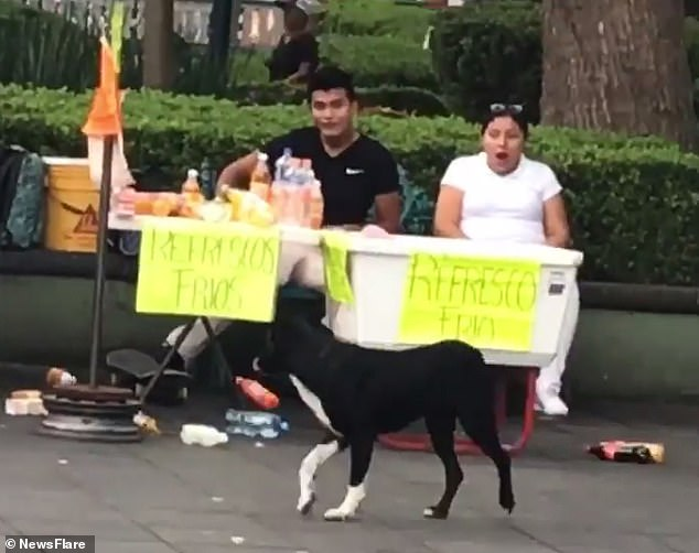 Vendors are shockedafter a dog accidentally crashed into their table and spilled beverages