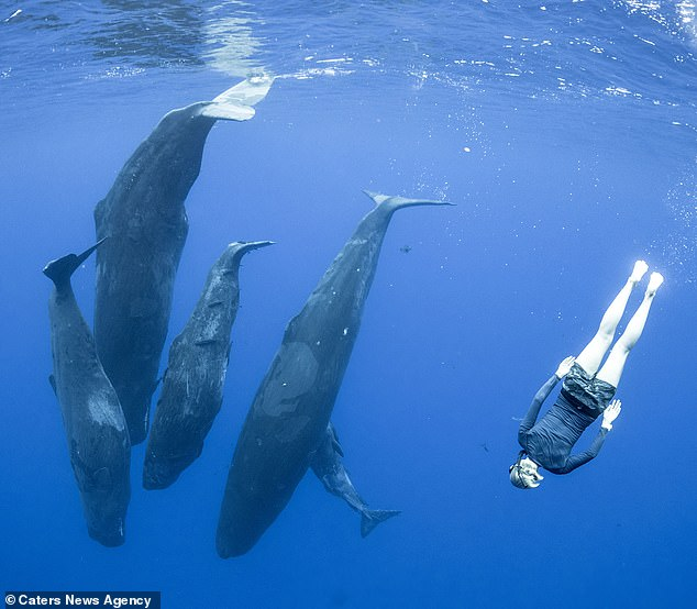 The short clip shows four sperm whales lolling in the water just below the surface while Irina, wearing a snorkel mask and flippers watches them from incredibly close proximity