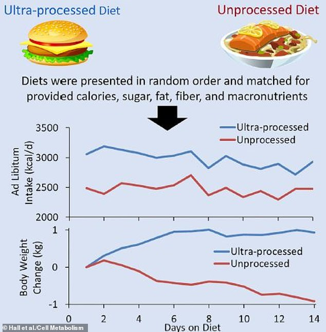 During their two weeks on ultra-processed diets, study participants ate more and gained weight (blue) but lost just as much on the unprocessed diets (red), the graphs show
