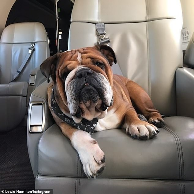 Lewis Hamilton goes vegan to save the planet while flying his dogs around the world by private jet. 'I'm away doing business, be right back.... #hollywooddogs' this picture was captioned