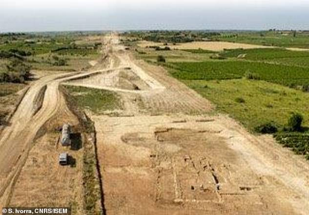 One seed excavated from a medieval site in Orléans in central France was genetically identical to a modern regional French white wine Savagnin Blanc. Pictured: Archaeological excavation of Roman farm at Mont Ferrier site in Tourbes, France