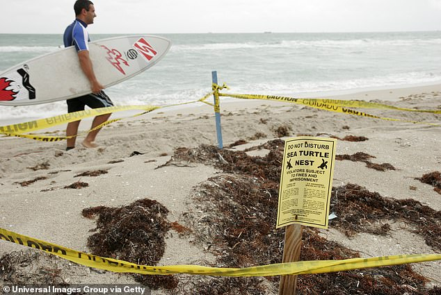 Witnesses and officers reported seeing Lu poking a sea turtles nest with a stick and stomping on it with her bare feet