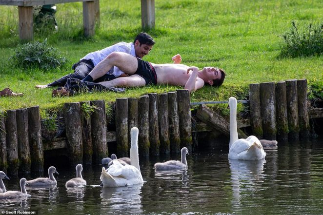 The youngster looked relieved after he was yanked to safety by a friend as the swans surrounded him on the River Cam on Sunday