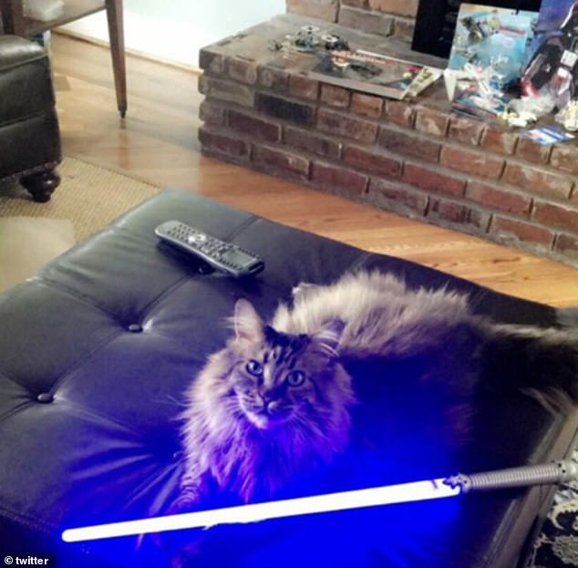 'The Force will be with you. Always': One fluffy friend, whose location is unknown, appeared prepared to defend the galaxy with its lightsaber