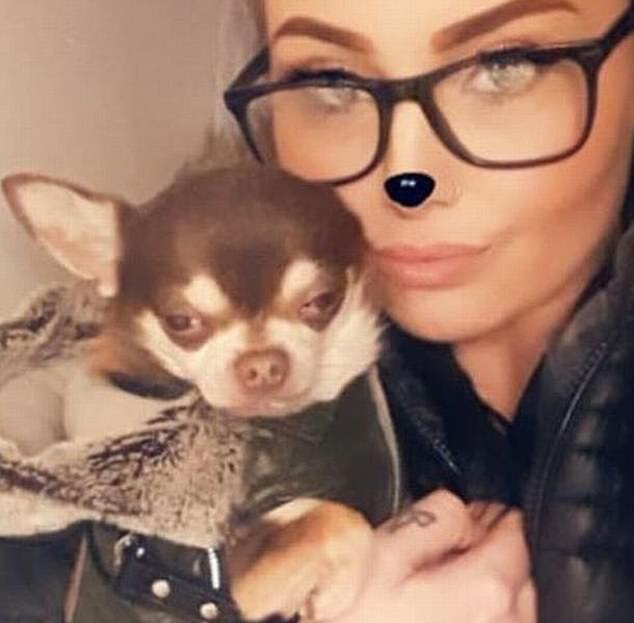 Becca Hill has been left distraught after Gizmo the Chihuahua was 'snatched' from a garden in Devon