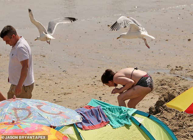 Gulls swooping in on sunseekers in Dorset, where thousands are enjoying a cooling dip