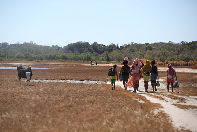 A search party walked for up to 15 miles a day to look for Alan's body in forests, swamp land and the countryside (pictured) in Anjajavy