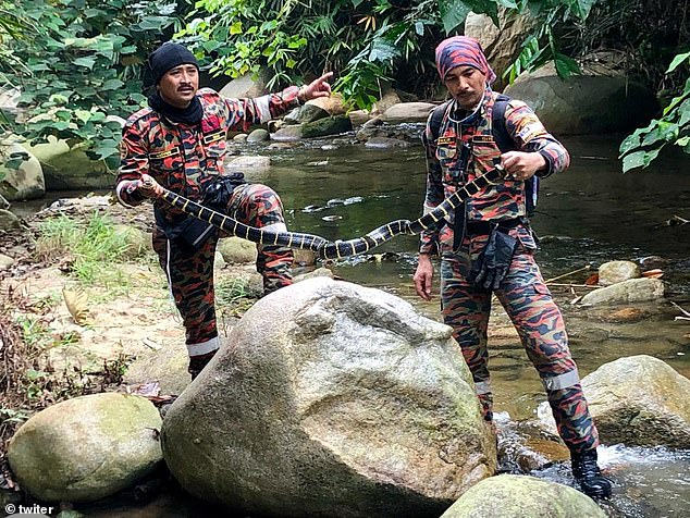 Two rescue team members hold a deadly cobra found near a river during the search for Nora