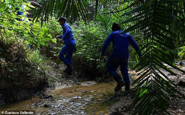 Rescue teams searched in the jungle today before a body was found near a waterfall