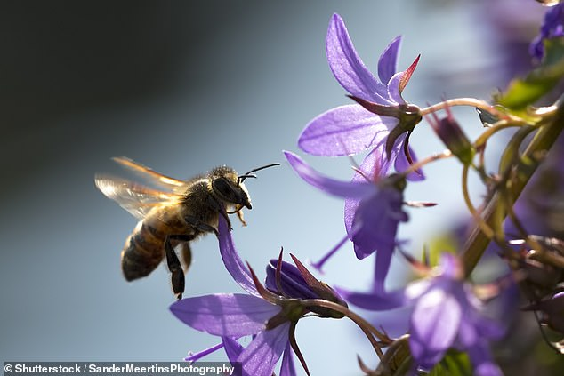Honey bees retain memories of good and bad social encounters, storing them in distinct clusters in their brains just like we do, researchers have found