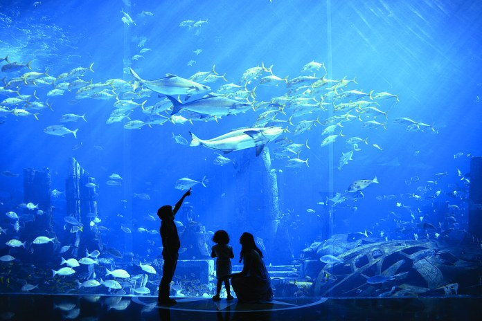 The Lost Chambers Aquarium, is home to 65,000 marine animals, and its calming atmosphere provides a welcome break from the heat