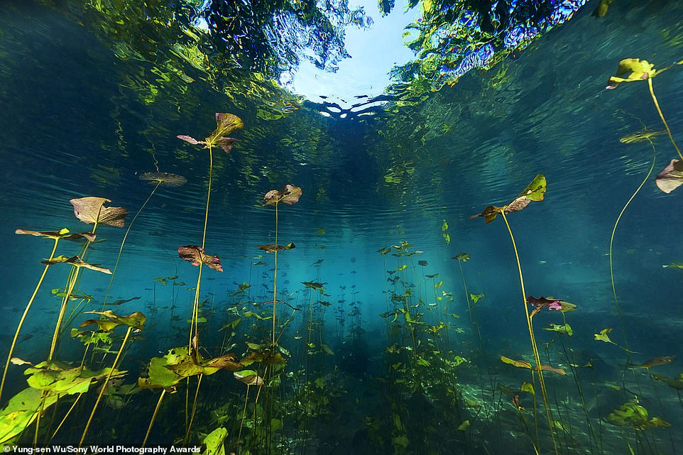 The 2019 edition of the Sony World Photography Awards received 327,000 entries from 195 countries and territories. Pictured is an entry to the 2020 competition by Taiwanese snapperYung-sen Wu of a natural freshwater lake in North Sulawesi, Indonesia. It is in the natural world and wildlife category in the open competition