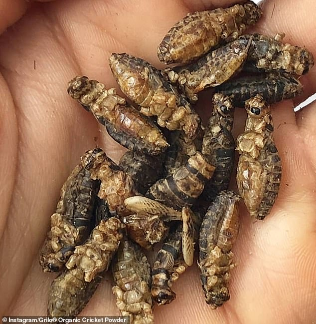 Crickets, as a food source, come with Omega 3, for healthy brain and nerve function, potassium, vitamin B12, iron and calcium.