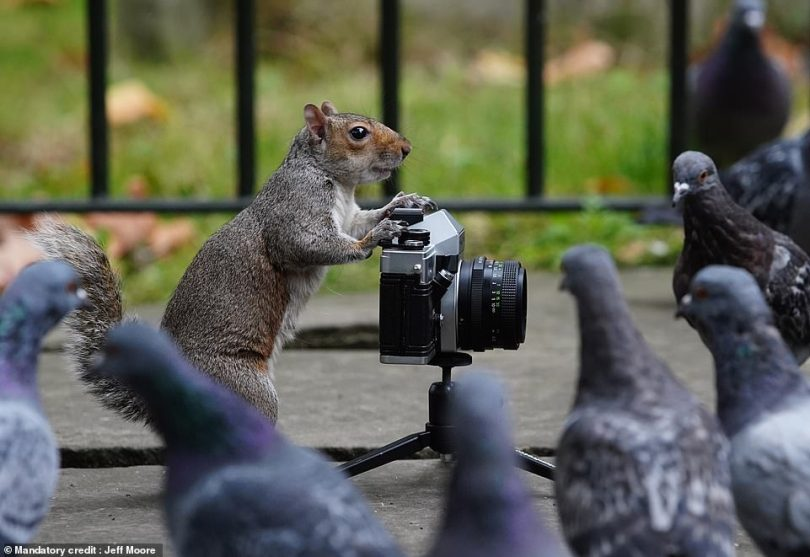 Mr Moore added: 'We thought we would test the film with pictures of these squirrels. They just started jumping all over it basically. And then their pigeon mates came along to have their picture taken'