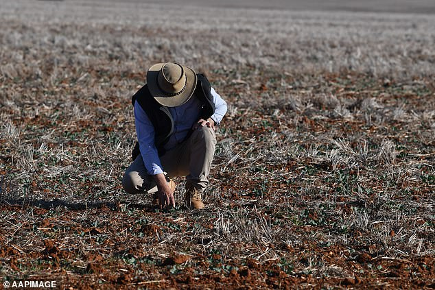 An Australian farmer has broken down in tears as he revealed the devastating impact of drought on his family (stock image)