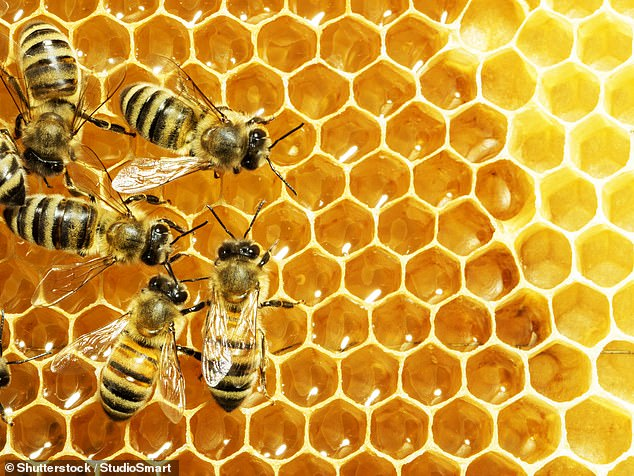 Bees were shown to 'slow down' and take more care selecting the answer when punished for the wrong answer (stock image)