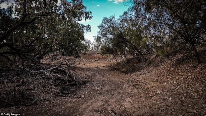 According to the Bureau of Meteorology's September update for the Murray¿Darling Basin, rainfall was lower than average across 83 per cent of the area. Pictured: Dead trees atNamoi River