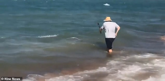 A man has been filmed attacking a snake with a walking stick in the ocean (pictured) off a beach in Queensland