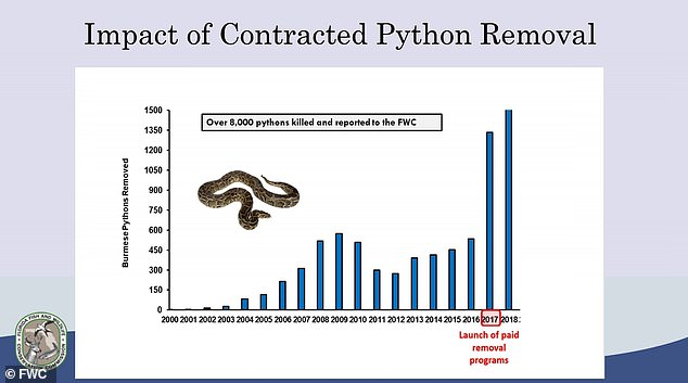 Despite the inherent risks and dangers involved, the python hunter job pays just $15 an hour and comes with a one-year contract with no healthcare benefits